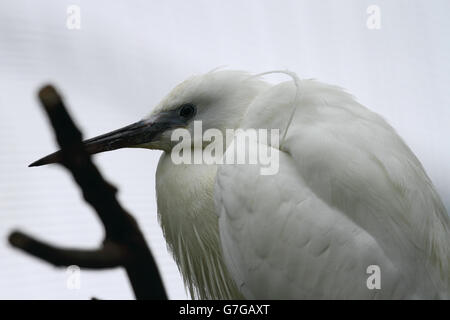 Animals and birds - Stock Image