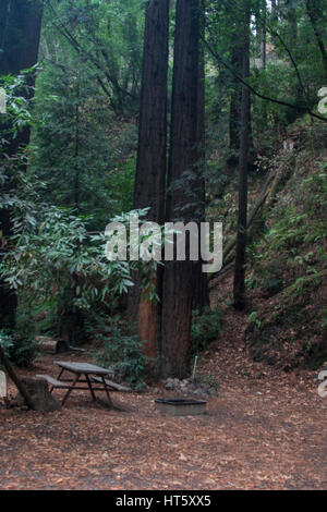 Campsite picnic table and redwood trees in the Fernwood campground on the Big Sur River in Big Sur California. - Stock Image