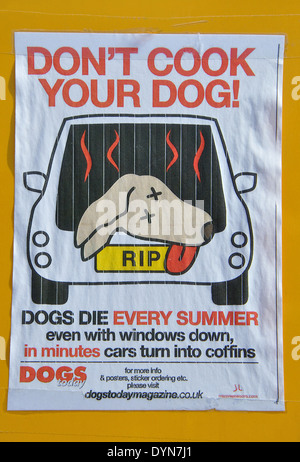 Don't Cook Your Dog poster, England, UK - Stock Image