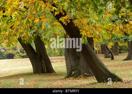 Trees with autumn foliage in suburban park - Stock Image