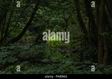 Tree In The Distance - Stock Image