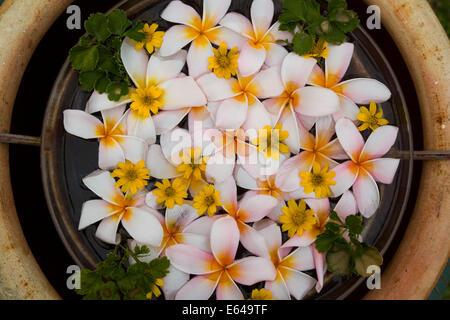Palau Pangkor Laut, Floral decoration, Malaysia - Stock Image