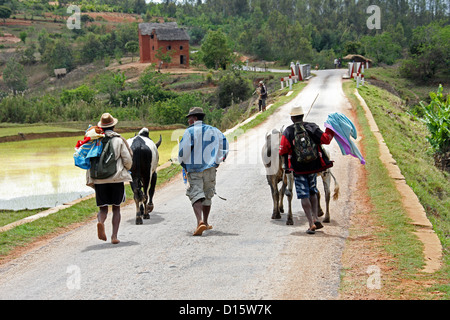 People Walking Down a Road in Rural Madagascar. Near Ambositra, Madagascar, Africa. - Stock Image