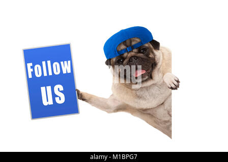 frolic pug puppy dog with cap, holding up blue follow us sign, hanging sideways from white banner, isolated - Stock Image