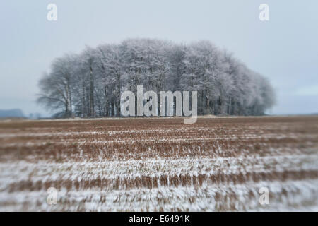 Copse of trees in snow and frost, Gloucestershire, UK - Stock Image