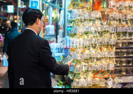 Local man examines the tropical fish at Hong Kong's Tung Choi Street goldfish market, Mong Kok, Hong Kong - Stock Image