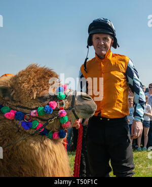 Hungerford, West Berkshire, UK. 19th Apr 2019. Melbourne 10 Racing Camel Racing winner AP McCoy (Sir Anthony Peter McCoy OBE, commonly known as AP McCoy ) former champion horse racing jockey The Peter O'Sullevan Lambourn Open Day is a unique opportunity to visit Lambourn Valley trainers' yards and come face to face with the horses and trainers along with their staff and jockeys in the morning with popular horse events in the main arena in the afternoon - Stock Image