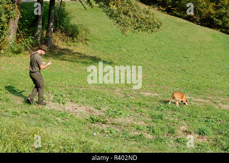 A hunter with a tracking hound on work. - Stock Image