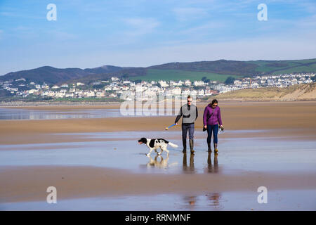 A couple walking a Springer Spaniel dog on a quiet sandy beach at low tide. Woolacombe, North Devon, England, UK, Britain - Stock Image