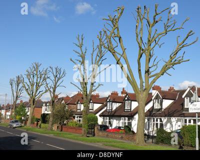 Extreme tree surgery Chester Road Grappenhall Warrington England UK WA4 2PL Spring 2013 - Stock Image
