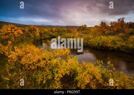 Dovre, Norway, September 13th, 2018. Autumn colors at Fokstumyra nature reserve, Dovre, Norway. Credit: Oyvind Martinsen/ Alamy Live News - Stock Image