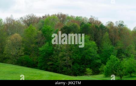 Springtime Foliage in East Tennessee - Stock Image
