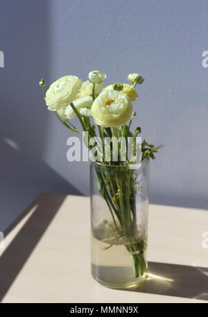 Natural white / light yellow flowers. A photo with multiple flowers in a vase that's on a wooden table. Grey background. - Stock Image