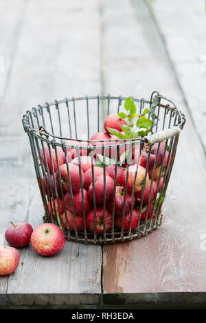 Apples in wire basket - Stock Image