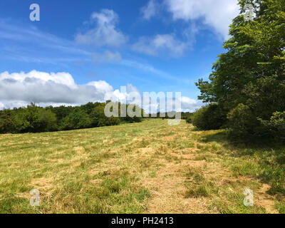 View of recently mowed meadow on top of Hooper Bald off Cherohala Skyway in North Carolina - Stock Image