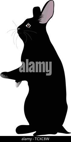 Black rabbit standing - Stock Image