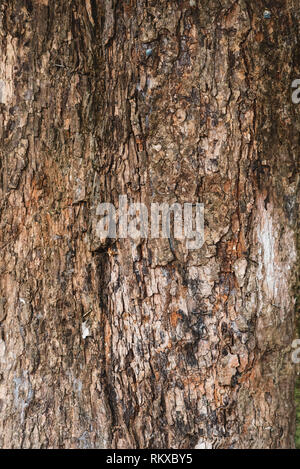 full frame image of a old and aged tree bark for background. vertical orientation - Stock Image