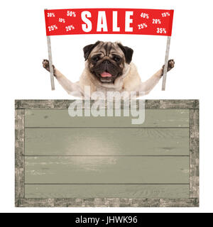 happy cute pug puppy dog holding up red banner sign with text sale % off, with vintage wooden board isolated on - Stock Image