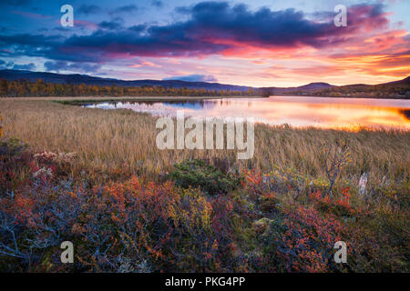 Autumn colors at Fokstumyra nature reserve, Dovre, Norway. Credit: Oyvind Martinsen/ Alamy Live News - Stock Image