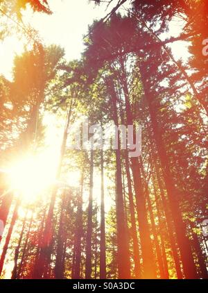 Burst of sun through forest - Stock Image