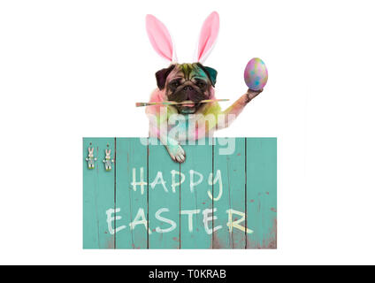 colorful easter pug dog bunny painting easter eggs with paintbrush, hanging on vintage wooden sign with text happy easter, isolated on white backgroun - Stock Image