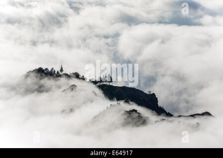 Trees above the clouds, Santo Antao, Cape Verde - Stock Image