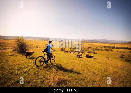 Side view of man on bicycle in field against clear sky - Stock Image