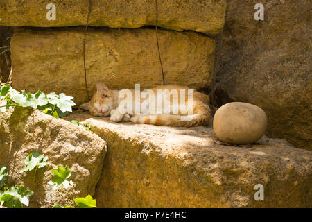 Italy Sicily Agrigento old town ginger tabby cat sleeping lying napping resting on ruins stones by large round stone feline fauna peaceful scene ivy - Stock Image