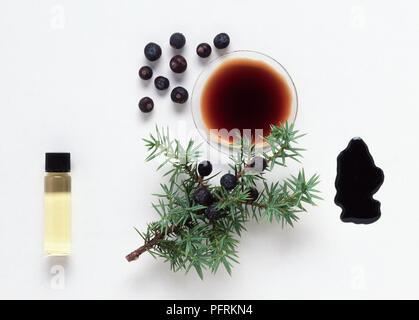 Various Forms of the Juniper Herb - Stock Image