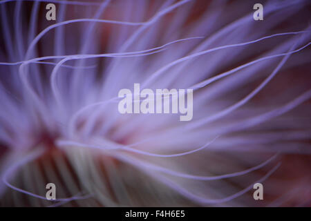 Sea anemone abstract - Stock Image