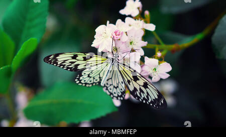 Butterfly on a flower - Stock Image