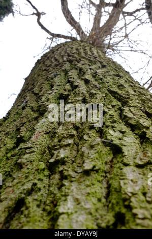 Tree bark - Stock Image