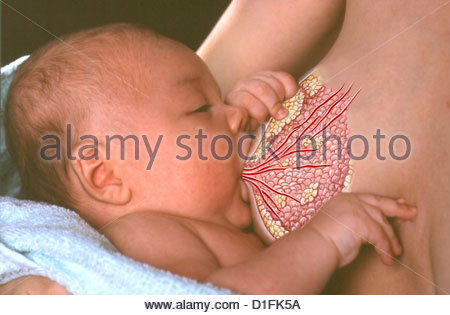 ILLUSTRATION - BREASTFEEDING - Stock Image