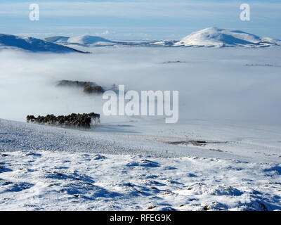 View towards Tinto, snowy Southern Uplands from Langlaw hill, near Broughton, Scotland - Stock Image
