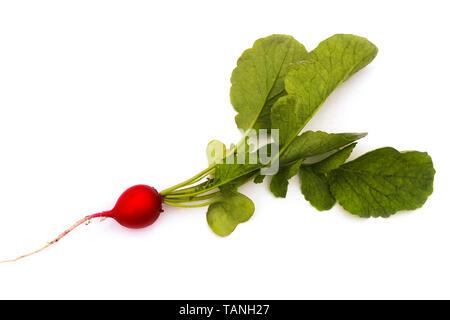 Radish closeup isolated on white background - Stock Image