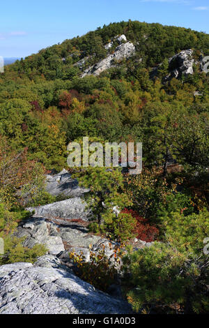 Tree and cliffs Shawangunk Mountains, The Gunks New York A - Stock Image