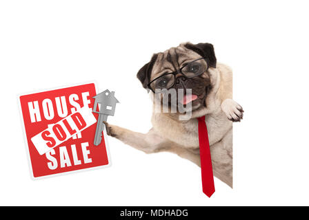 smiling business pug dog with glasses and tie, holding up red house sold sign and key, isolated on white background - Stock Image