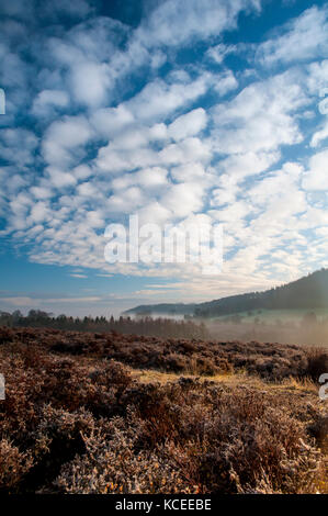 A view across the heather on Spaunton Moor towards a mist-filled Rosedale in the North York Moors National Park. - Stock Image