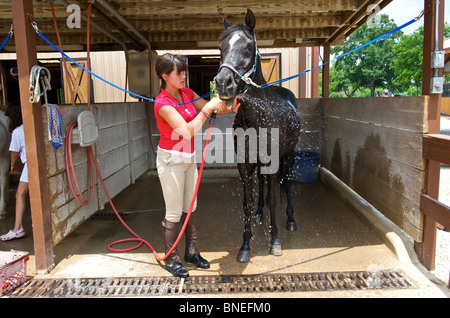 Teenage girl washing her horse after riding, Houston, Texas, North America, USA - Stock Image