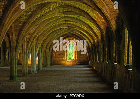 The Cellarium in Fountains Abbey, North Yorkshire has a magnificent vaulted roof. The Abbey was destroyed as part of King Henry VIII's Reformation. - Stock Image