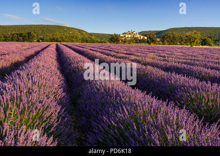 Lavender fields at sunrise with the village of Banon in summer. Alpes-de-Hautes-Provence, Alps, France - Stock Image