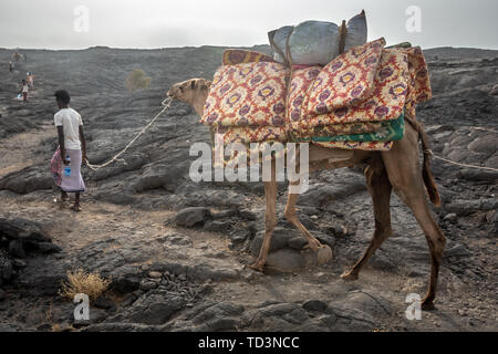 A caravan of camels and tourists traversing the barren volcanic landscape surrounding the Erta Ale Volcano in the Afar Region of Ethiopia - Stock Image