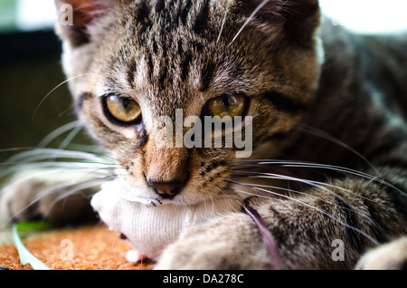 Cat with a mouse - Stock Image