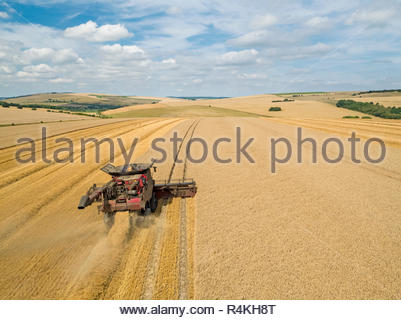 Harvest aerial of combine harvester cutting summer wheat field crop with tractor trailer on farm - Stock Image
