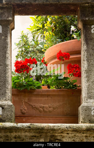 Flowers on medieval stairs in the village of Lucignano d'Asso in Tuscany Italy - Stock Image