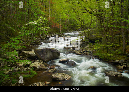 Springtime in the Great Smoky Mountains of Tenessee - Stock Image