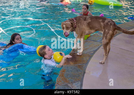mix-breed Catahoula Leopard licking nose, boy, girls, children, playing in freshwater swimming pool, Castro Valley, - Stock Image