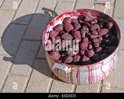 Boiled vegetables small red beets close up in kettle outdoor - Stock Image