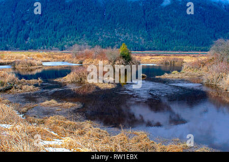 An icy pond along the dike in Pitt Polder, Pitt Meadows, British Columbia, Canada - Stock Image