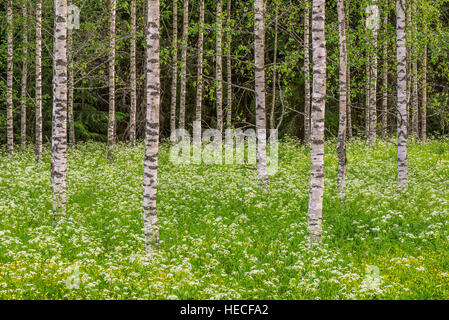 Summer forest landscape - Stock Image